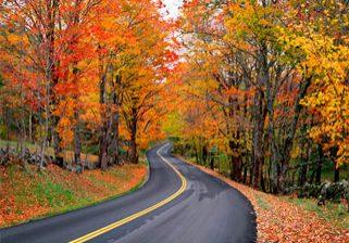 autumn-trees-1
